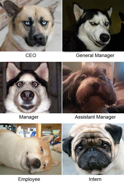 How CEO Manager Employee Intern Look Funny Image Joke